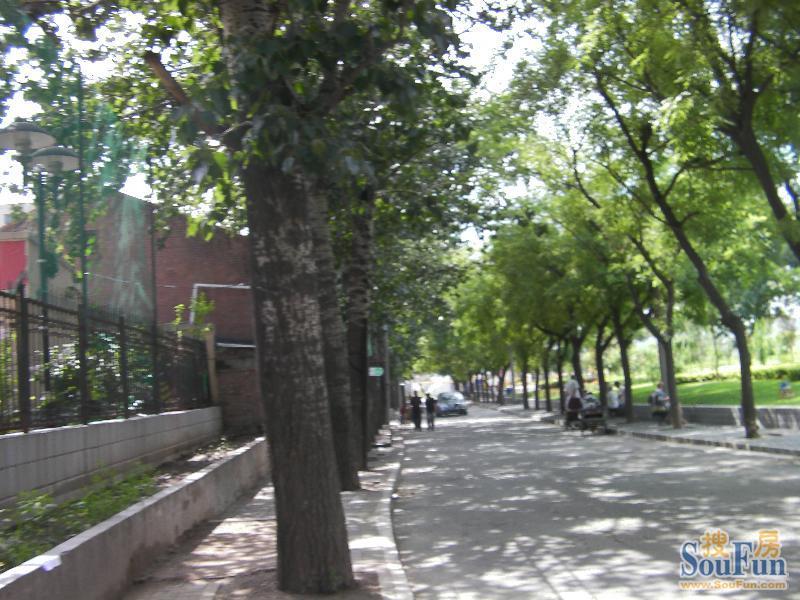 城市街道绿化种什么树图片