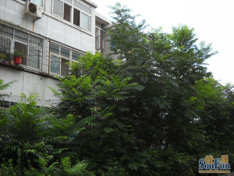 大红罗厂胡同 10平米中等装修1室0厅0卫,北京西城西四租房高清图片