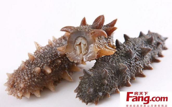 米的海洋棘皮动物