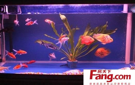 血鹦鹉鱼跟地图鱼混养怎么喂食 喂什么图片