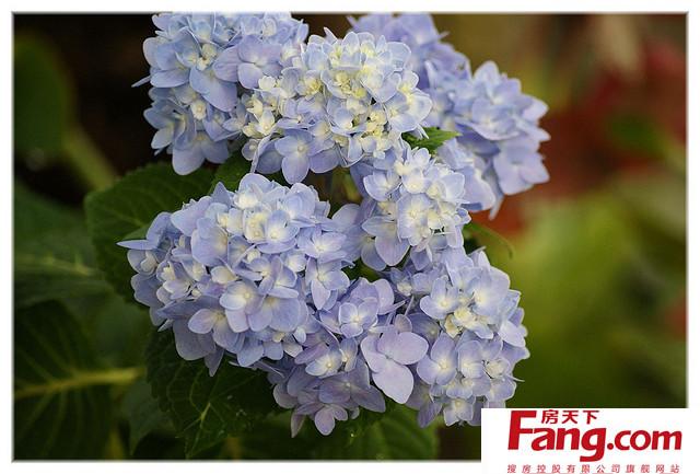 求完整的花语大全并附上各种花的图片,绿植鲜花都要,谢谢,请发到