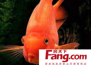 风水鱼有哪些图片