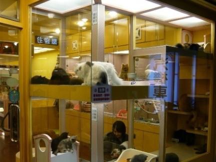 宠物店装修设计