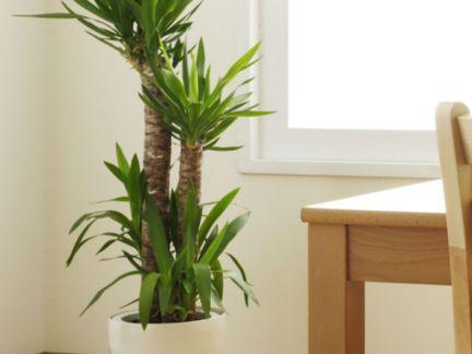 室内盆栽植物图
