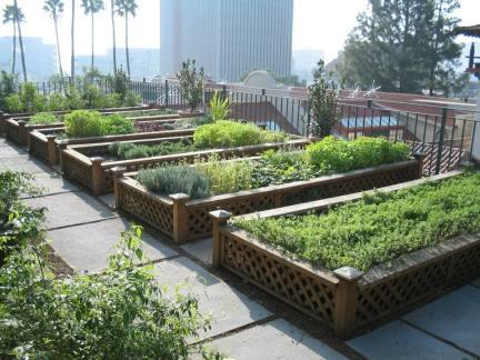 屋顶菜园设计图片