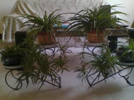 客厅铁艺花架