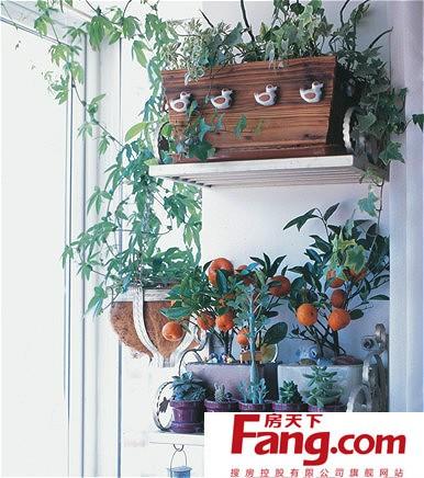 小户型家装夏季阳台植物装饰图片