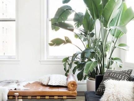 现代客厅角落大型盆栽装修设计
