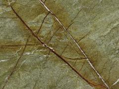 雨林绿 TM8E501(S)